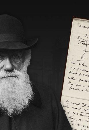 Des manuscrits de Charles Darwin volés à la bibliothèque de l'Université de Cambridge